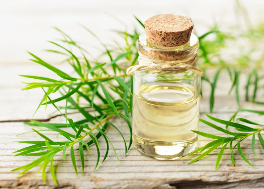 Tea Tree Essential Oil Benefits to make You look Gorgeous